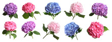Set With Delicate Beautiful Hortensia Flowers On White Background. Banner Design