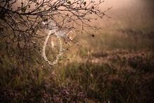 Morgentau Im Spinnennetz