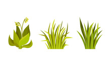 Green Grass With Stalk And Leaves As Outdoor Growth Vector Set