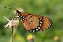 Beautiful Butterfly On Wild Flower In The Garden