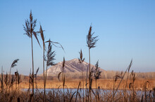 Peaceful Landscape Of Brown Reed Plumes In Front Of A Frozen Lake And A Solitary Mountain