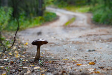 Mushroom In The Forest On A Roadside