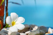 Plumeria White Flower And Beach Background. Pagoda On Rock Beach, Summer Concept .