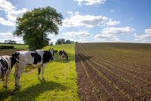 Agriculture Et élevage En France.