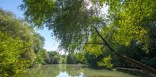 Summer Old Pond With Lush Vegetation