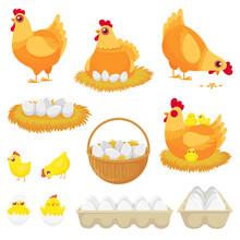 Chicken Eggs. Hen Farm Egg, Nest And Tray Of Chickens Eggs Cartoon Vector Illustration Set