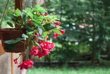 Flowers In Pot In The Garden In Reataurant. Copy Space.