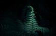 Liść paproci na czarnym tle. Liść wyizolowany z tła, natura w lesie