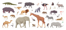 Flat Set Of African Animals. Isolated Animals On White Background. Vector Illustration