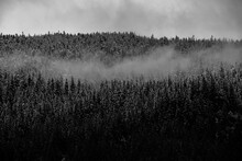 Misty Morning Mist