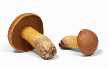 Two Mushrooms Xerocomus Are Liying On White Background, Isolated, Closeup