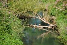 Zwei Ente Auf Dem Ast  Mit Bäume Rundherum Im Naturschutzgebiet