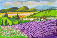 Lavender Fields On A Hillside