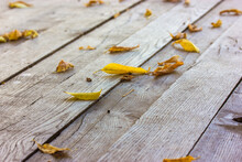 Yellow Dried Fallen Leaves Lie On An Old Wooden Floor Surface, Planks, Boards, Bridge, Rustic Table, Bench, Walkway From Above. Late Autumn, Cold Fall Season. Nature Concept Flatly. Change Of Seasons.