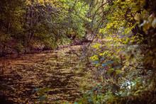 Rivière En Automne, Arrière Plan Ruisseau Au Couleurs D'automne, Feuilles D'arbre Tombé Sur L'eau