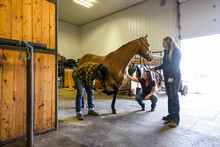 Veterinarians Inspecting Horse Inside Equine Rehab Barn