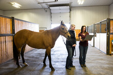 Female Veterinarians With Horse And Laptop In Equine Rehab Barn