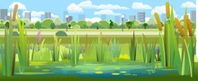 Landscape With A Swampy Shore Of A Lake Or River. Coast Is Overgrown With Grass, Reeds And Cattails. View Of The City Park. Water With Water Lily Leaves. Wild Pond. Vector