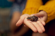 An Image Of A Small Brown Frog Sitting On A Hand. High Quality Photo