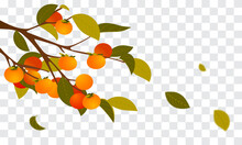 Persimmon Branch With Leaves Falling Vector Illustration. Autumn Tree On Transparent Background.