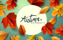 Autumn Fall And Thanksgiving Background With Falling Leaves. Vector Background.