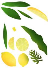 Lemon Leaves And Green Illustration