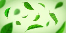 Realistic Background With Green Tea Leaves Flying In Wind. Nature Fresh Effect With Herbal Leaf In Air. Organic Tea Plantation Vector Banner