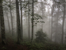 View Of The Black Forest In Germany With A Lot Of Fog. Very Scary.