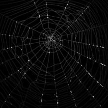 Realistic Cobweb With Gradient Green Background Vector Design Illustration