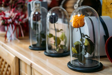 Preserved Stabilized Roses In Flower Florist Shop, Boutique. Flower Head Preserved, Infinity Rose In Glass Dome, Made From Real Fresh Beauty Rose