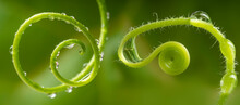 Flower And Dew Drops - Macro Photo