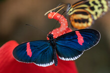 Butterflies On Plant In Ecuador.