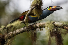 Bird In The Wild In Ecuador.