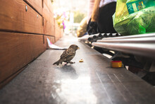 Small Sparrow Eating Bread From People On The Street. Sad And Lonely Bird On The Street Full Of People