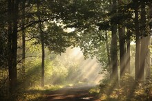 A Forest Path Among Oak Trees On A Misty Autumn Morning