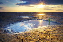 Sea Asparagus Growing In The Puddle On The Cracked Land At Sunset Under A Cloudy Sky