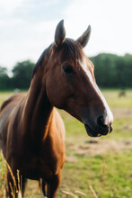 Brown Horse With White Details