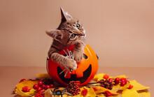 Halloween Supplies And A Kitten Sitting In Pumpkin Jack-o-lantern On A Brown Background