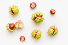 Chestnuts Fruits On A White Background. Ripe Chestnuts. Cracked Chestnuts.