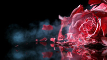 Freeze Motion Of Red Rose Frozen And Exploding, Close-up.
