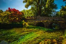 Medieval Ruins In An Enchanted Garden, Giardini Di Ninfa, Latina, Rome
