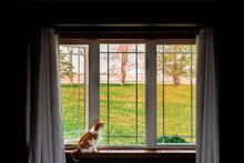 Cat Sitting On Window Sill Looking Outside