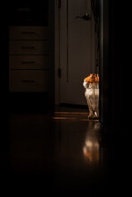 Orange And White Cat Sitting In Sunlight Inside A Kitchen