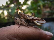 Close-up Of Hand Feeding Outdoors