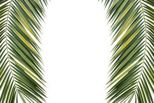 Two Tropical Green Palm Leaves Isolated On White Background