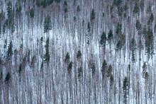Mixed Woodland In Mala Fatra Mountains, Slovakia.