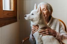 Elderly Woman Tenderly Hugs Her White Siberian Husky Puppy Dog