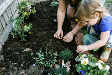 A Mother And Her Child Planting Pansies And Bare Root Strawberries
