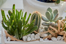 Succulent Plant In The Vase For Decoration And Present