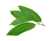 Leaf Of Sugar Apple Isolated On White Background